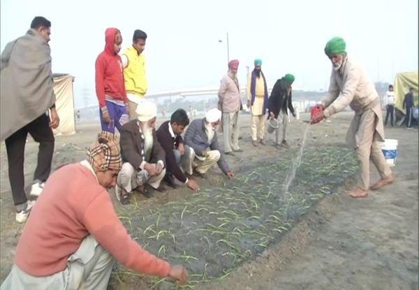 ખેડૂતોએ નિરંકારી ગ્રાઉન્ડમાં ડુંગળીની વાવણી શરૂ કરી દીધી.