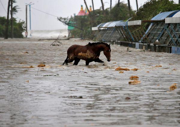 घोड़े को यास तूफान से होने वाली परेशानी का अंदाजा नहीं था, लेकिन जब समंदर का पानी सड़कों पर आया तो वह उसमें फंस गया। फोटो मेदिनीपुर के दीघा की है।