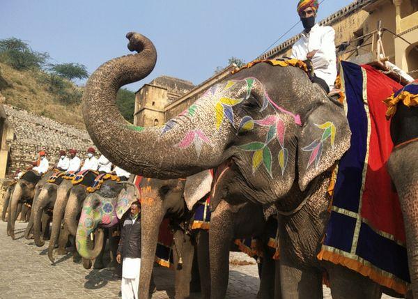 रोक हटने की खुशी में पहले दिन हाथियों के साथ महावत भी सज-धजकर आए थे।