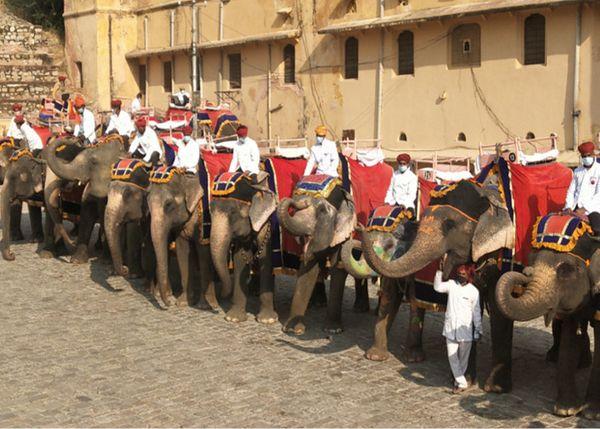 हाथी स्टैंड पर पर्यटकों के इंतजार में पहले दिन 96 में से 50 हाथियों को सजाकर लाया गया।