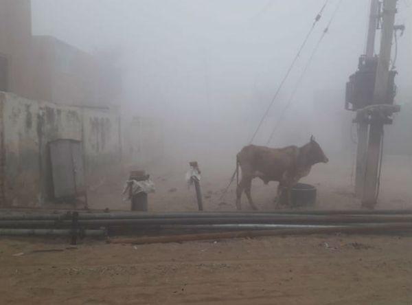 बीकानेर के गोपालसर गांव में सर्दी के कारण कोहरा रहा। फोटो : विनोद शर्मा