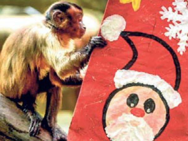 क्रिसमस पर मिलने वाले गिफ्ट को जानवर बकायदा खोलकर देख रहे हैं। - Dainik Bhaskar
