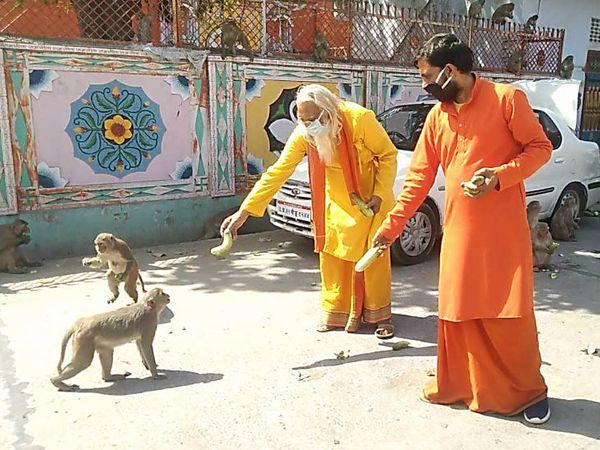 राम जन्मभूमि के पास बंदरों को फल खिलाते मुख्य पुजारीआचार्य सत्येंद्र दास (पीले कपड़ों में)।
