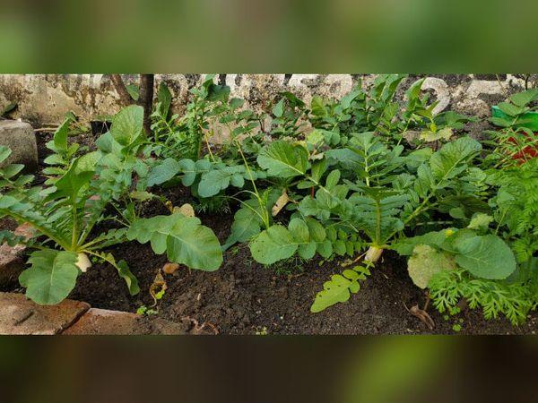 इन दिनों अनिमेश घर में उगाई सब्जियां ही खा रहे हैं।