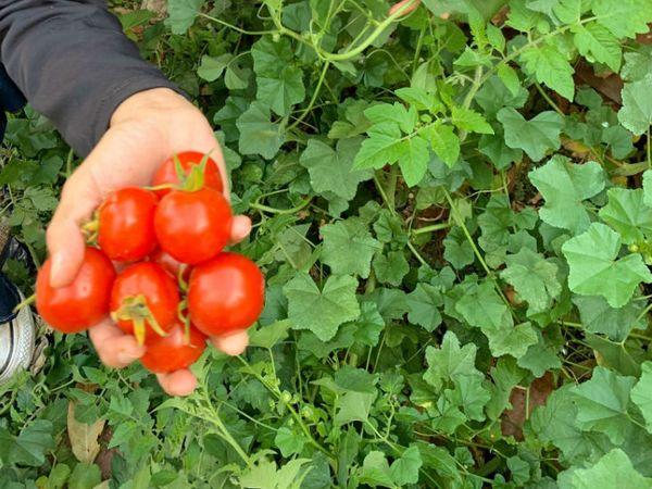 अनिमेश कहते हैं घर पर हमें जैविक सब्जियां मिल रही हैं। संक्रमण का कोई खतरा नहीं।