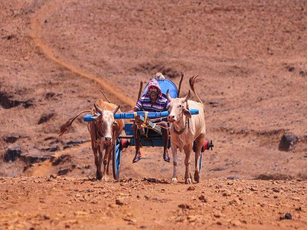 महाराष्ट्र के कई इलाकों में सूखे की स्थिति बन रही है। इस बीच लॉकडाउन में मिली छूट के बाद किसान खेतों में काम के लिए निकले।