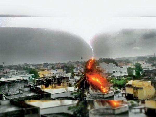 तस्वीर गुजरात के पालीताणा की है। मंगलवार को शहर के हाउसिंग बोर्ड क्षेत्र में तेज गर्जना के साथ पेड़ पर बिजली गिरी और आग लग गई। शुक्र है कि किसी की जान नहीं गई। - Dainik Bhaskar
