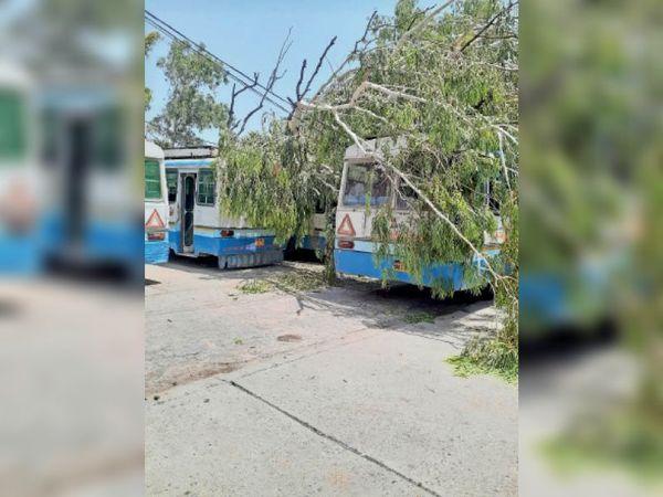 करनाल. पुराने बस स्टैंड पर सोमवार को भी बसों पर पड़ा रहा पेड़। - Dainik Bhaskar