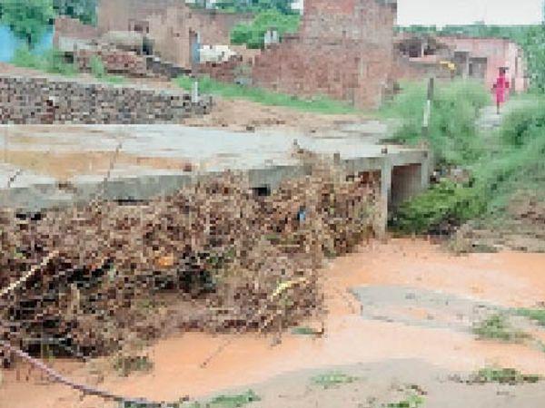 गांव तारापुर के काज-वे में लक्कड और झाड़ियां फसने कारण आई रुकावट। - Dainik Bhaskar
