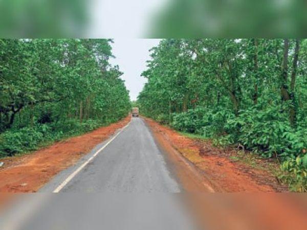 मुंगेर जमुई को जोड़ने वाले एनएच 333 का जंगली मार्ग। - Dainik Bhaskar