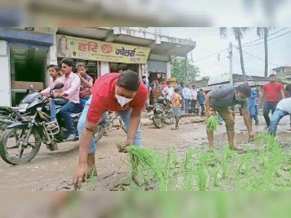कसबा में कीचड़ से पटे जर्जर सड़क पर धनरोपनी करते युवा राजद जिलाध्यक्ष नवीन यादव व अन्य। - Dainik Bhaskar