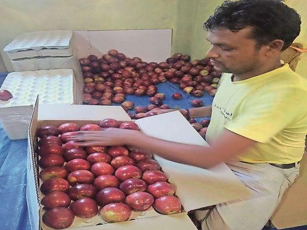 छैला के गुम्मा में सेब की पैकिंग करता हुआ मजदूर। - Dainik Bhaskar