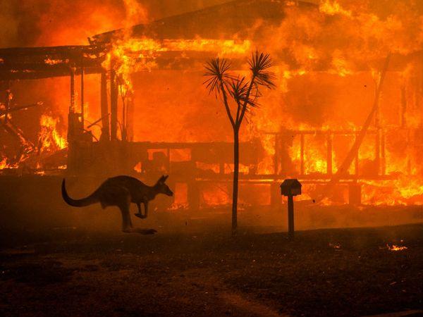 आग में ऑस्ट्रेलिया के कई राज्य प्रभावित हुए थे। इस आग में स्तनधारी, रेपटाइल्स, चिड़िया और मेंढक मारे गए थे।