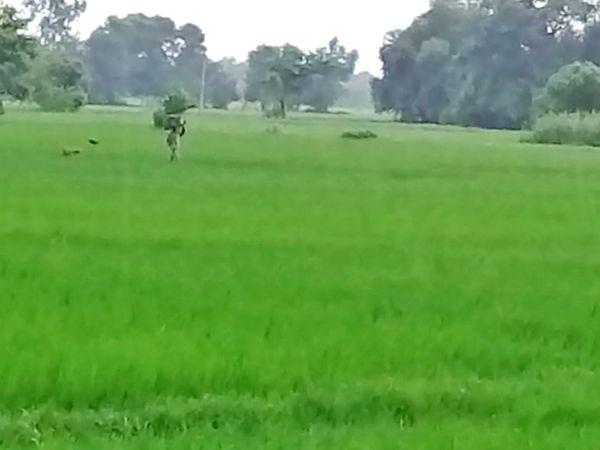 ग्रामीणों का कहना है कि यहां खेती करना बड़ी चुनौती है, लेकिन कमाई का दूसरा कोई जरिया नहीं, इसलिए खतरा उठाते हैं।