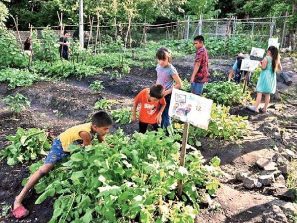 100 से ज्यादा परिवारों के बच्चों ने उनकी सलाह पर कम्युनिटी गार्डन शुरू कर दिए। इसके बाद उन्हें फल-सब्जी के लिए बाजार का भरोसा नहीं करना पड़ता। - Dainik Bhaskar