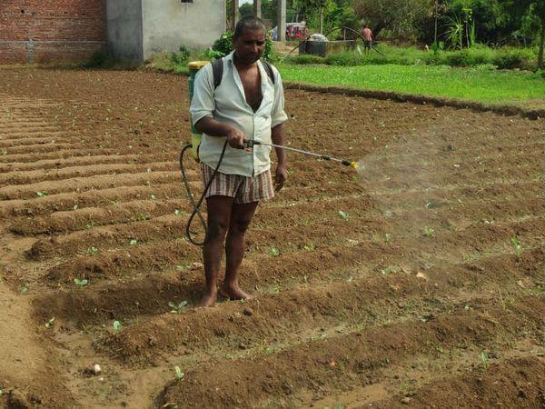 खेत में स्प्रे करता किसान।