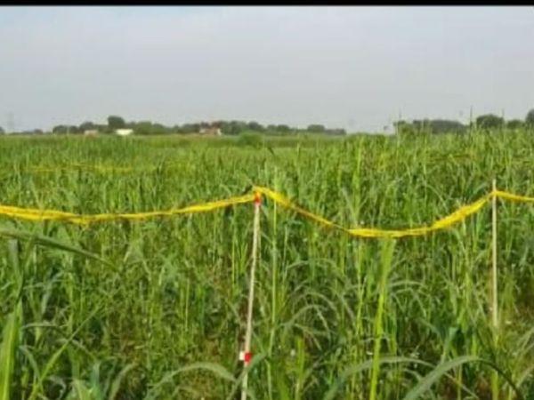 यूपी में बाजरे के खेत में एक दलित नाबालिग युवती का शव बरामद किया गया है। परिजनों ने रेप के बाद हत्या की आशंका जताई है। - Dainik Bhaskar