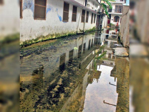 आनंदपुरी माेहल्ले में लगी काई, जिसमें फिसलकर जख्मी हाेते हैं लाेग। - Dainik Bhaskar