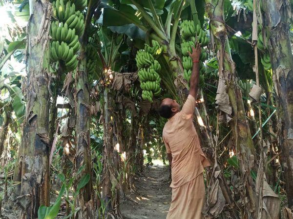 अमरेंद्र कहते हैं कि नई तकनीक से खेती की जाए तो इसमें काफी स्कोप है। सिर्फ पारंपरिक खेती के भरोसे नहीं रहा जा सकता है।
