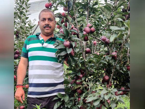 उत्तराखंड के रानीखेत ब्लॉक के रहने वाले गोपाल दत्त उप्रेती ऑर्गेनिक सेब की खेती करते हैं। - Dainik Bhaskar