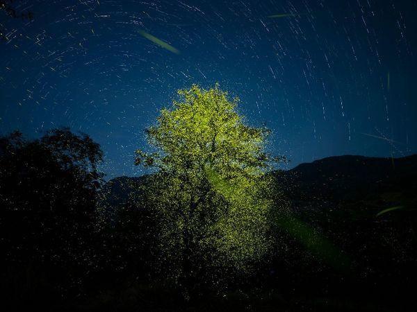 इस फोटो के लिए ऐश्वर्या को मिला वाइल्डलाइफ फोटोग्राफर ऑफ द ईयर अवॉर्ड।