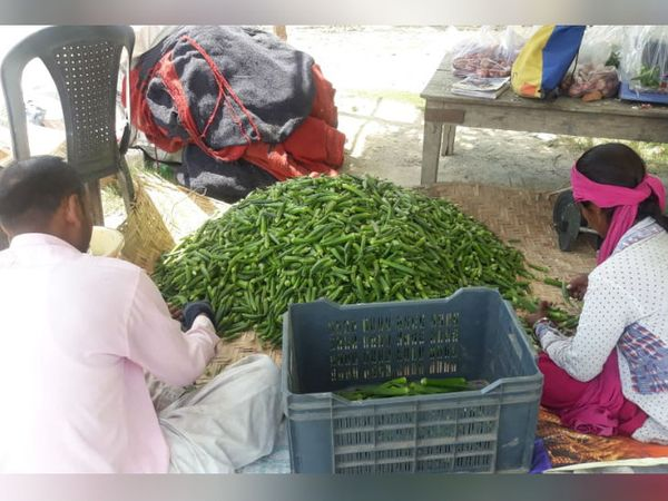 खेत से सब्जियों को तोड़ने के बाद उन्हें डिलिवरी के लिए पैक किया जा रहा है।