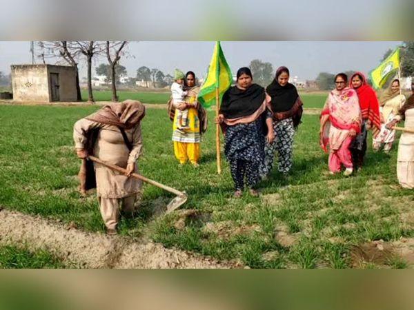 खेतों में मेहनत कर रहीं महिलाएं हर उम्र की हैं। इस फोटो में एक बुजर्ग फावड़ा चला रही हैं तो दूसरी महिला ने किसान यूनियन का झंडा संभाल रखा है, ताकि खेतों के लिए शुरू हुआ संघर्ष खेतों में भी लगातार चलता रहे।