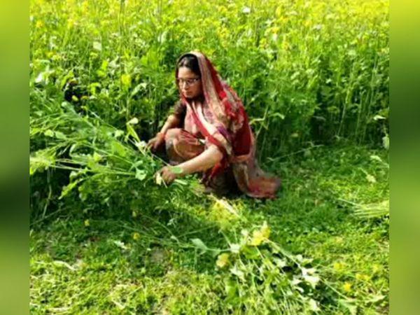 अगेता की ये महिला खेतों में मवेशियों के लिए चारा लेने आई हैं। कुछ दिन पहले घर के मर्द ये काम करते थे, लेकिन अब वो आंदोलन कर रहे हैं। लिहाजा, इस जिम्मेदारी को इन्होंने अपने कंधों पर उठा लिया।