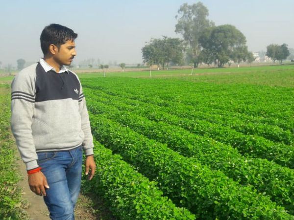 कैटल फार्मिंग के साथ ही उन्होंने अब सब्जियों की खेती भी इस साल से की है।