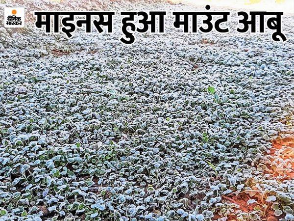 हिल स्टेशन माउंट आबू में माइनस में पहुंचे तापमान के कारण ओरिया क्षेत्र में सुबह खेत और बगीचों की घास पर ओस की बूंदें बर्फ बन गईं। - Dainik Bhaskar
