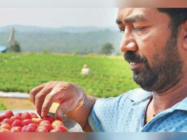 कर्नाटक में धारवाड़ के रहने वाले शशिधर चिक्कपा अपनी एक एकड़ ज़मीन पर स्ट्रॉबेरी की खेती करते हैं। - Dainik Bhaskar