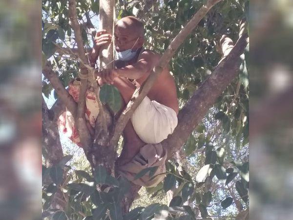 युवक आत्महत्या के उद्देश्य से पेड़ पर चढ़ गया था। - Dainik Bhaskar
