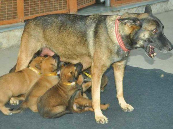 डॉग्स के फादर का नाम गाला है। ये दो मांओं की संतान हैं। मांओं का नाम ओल्गा और ओलेशिया हैं।