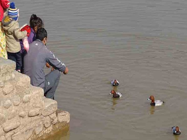 चंडीगढ़ की सुखना लेक पर आने वाले लोग पक्षियों को दाना डालते है। फोटो लखवंत सिंह - Dainik Bhaskar