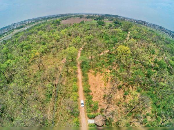 पार्क में बने ट्रैक खराब हो गए हैं, हट भी टूटने लगी हैं, पेड़ों की देखरेख न होने से वे भी सूखने लगे हैं। करीब 25 एकड़ में फैले इस पार्क में कई प्रजाति के पेड़-पौधे और जीव-जंतु हैं। - Dainik Bhaskar