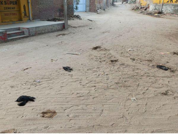 बीकानेर के ग्रामीण क्षेत्र में मृत अवस्था में मिले कौवें। - Dainik Bhaskar