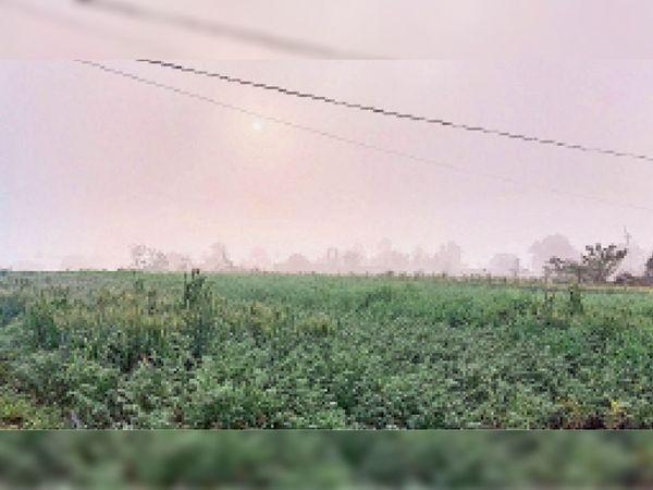 काेहरे की वजह से सुबह 9 बजे हुए सूर्य के दर्शन, हल्की किरणें इस तरह फसलाें पर पड़ी। - Dainik Bhaskar