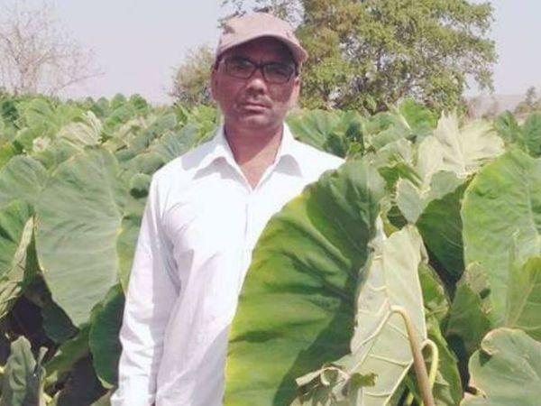 मध्यप्रदेश के खंडवा के रहने वाले रामचंद्र पटेल 25 साल से अरबी की खेती कर रहे हैं। - Dainik Bhaskar