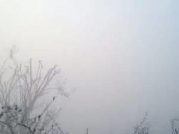 नीमकाथाना में गुरुवार सुबह घना कोहरा छाया रहा। - Dainik Bhaskar