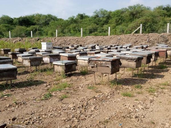 मधुमक्खी पालन की शुरुआत पांच बाक्स से कर सकते हैं। एक बॉक्स में लगभग चार हजार रुपए का खर्चा आता है।