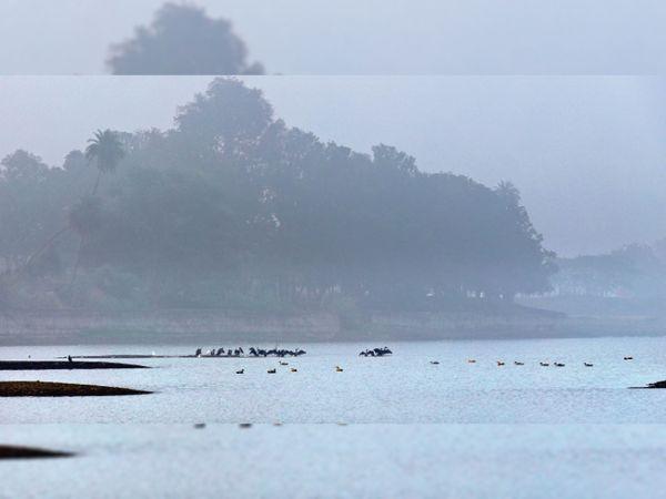 शहर के नटनागरा तालाब में सुबह के समय अटखेलियां करते हुए विदेशी पक्षी। - Dainik Bhaskar