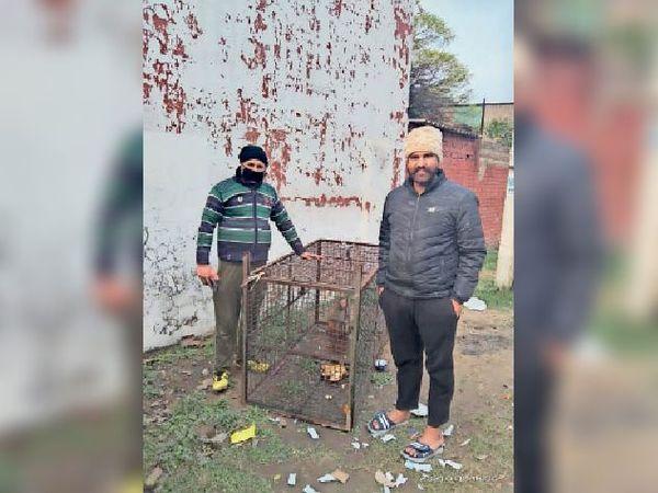 बंदर को पिंजरे में काबू करने के बारे में जानकारी देते हुए प्रदीप शर्मा।- भास्कर - Dainik Bhaskar