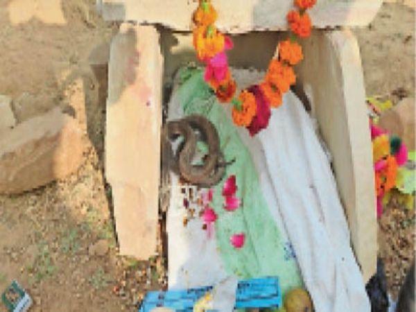 नहर किनारे निकला सांप, जिसे फूल चढ़ाए जा रहे है। - Dainik Bhaskar