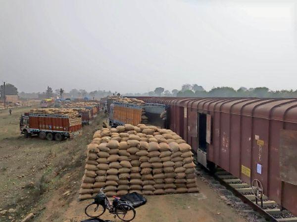 टीकमगढ़| ट्रकों से गेहूं की बोरियों को पहुंचाया रेलवे स्टेशन। सेलम जाने के लिए कुल दूरी 2018 किमी है। उक्त लदान से लगभग 32 लाख का राजस्व मंडल को मिला। - Dainik Bhaskar