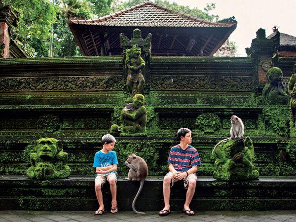इंडोनेशिया के उबुद स्थित बंदरों का अभयारण्य, यहां तीन हिंदू मंदिर भी हैं - Dainik Bhaskar