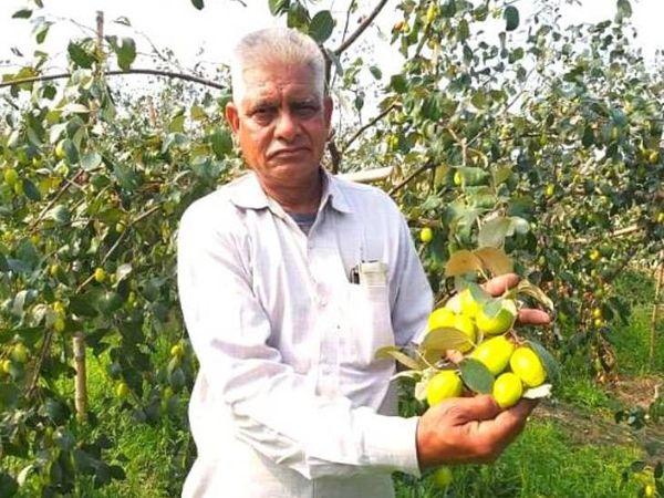 हरियाणा के जींद के रहने वाले सतबीर पूनिया थाई एप्पल बेर की खेती करते हैं। गांव के बच्चे उन्हें बेर वाले अंकल नाम से बुलाते हैं। - Dainik Bhaskar