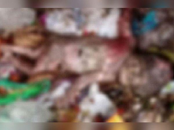 कुछ कुत्ते एक थैले में से मांस का लोथड़ाजैसा नोंच रहे थे ( फाइल फोटो)। - Dainik Bhaskar