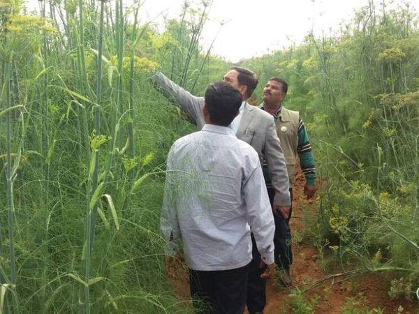 इशाक बताते हैं कि पौधों के बीच दूरी बढ़ाने से ज्यादा खरपतवार नहीं उगे। इससे लेबर कॉस्ट बच गई। कई ओर तरीकों के इस्तेमाल से खेती का खर्चा 4-5 गुना कम हो गया।