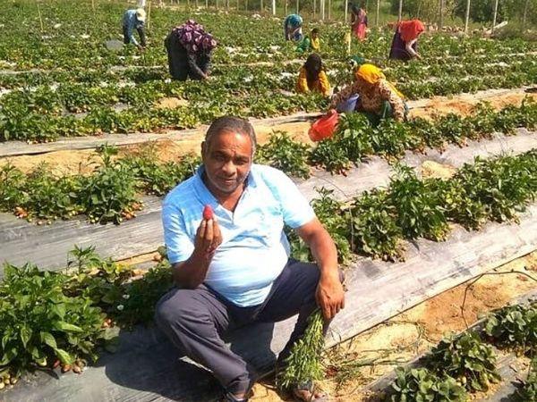 आज सुरेश के बाग में अमरूद, मौसमी, नींबू, आंवला, जामुन, आडू, जामुन, अनार, लीची, सेब, नारंगी सहित 1500 फलों के पौधे लगे हैं।
