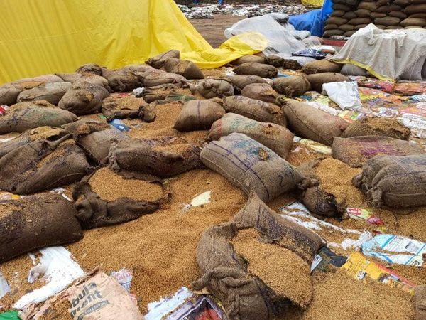 कवर्धा के केंद्र में आया धान खुले में रखा था, बारिश से भीगा। - Dainik Bhaskar